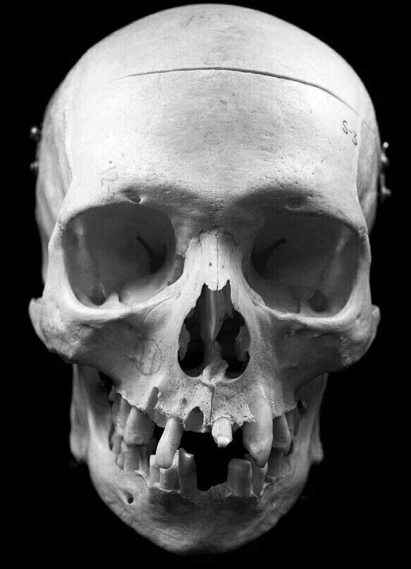 best 25 skull reference ideas on pinterest human skull
