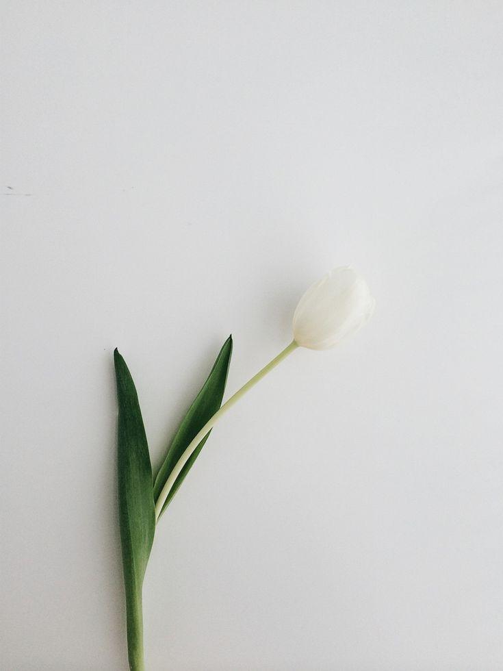 Spring! / photo by justrovinda