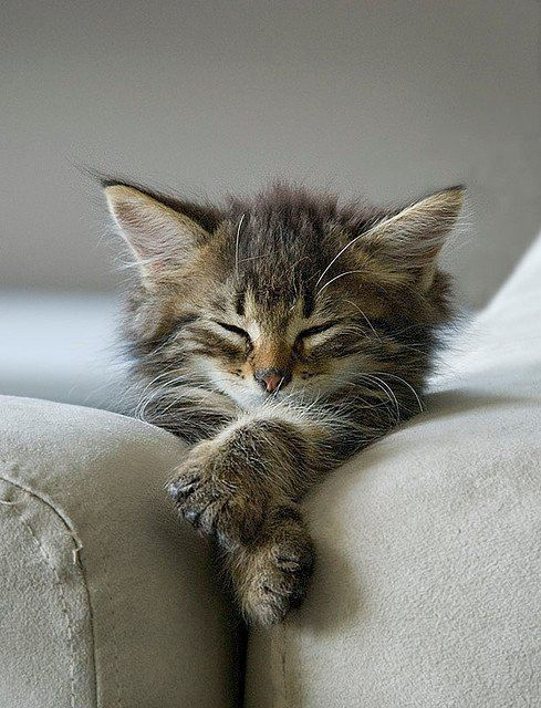 A nap is always welcome