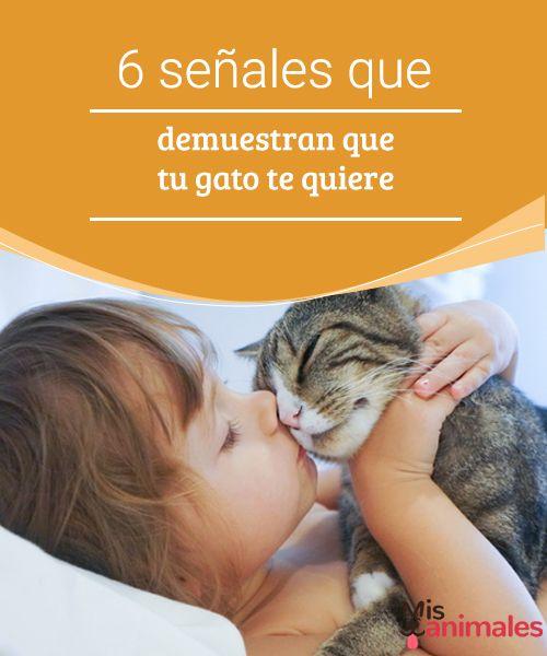 6 señales que demuestran que tu gato te quiere  ¿Cuántos veces te has preguntado si tu gato te quiere? En este post encuentra algunas señales que suelen dar los felinos para demostrar su cariño.