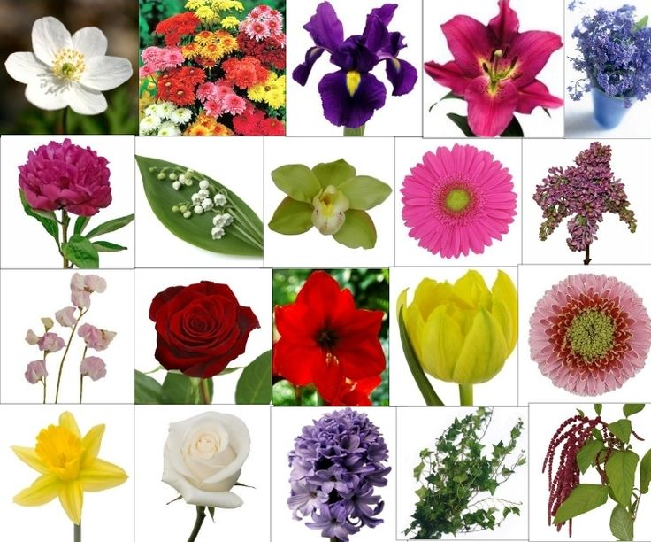 16 Best Images About MEANING OF FLOWERS On Pinterest