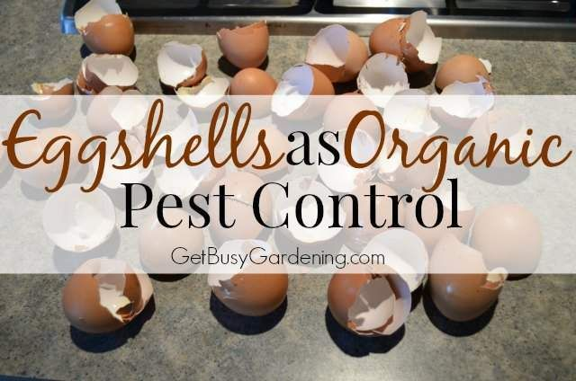 Eggshells As Organic Pest Control Let them dry out, crush them using a food chopper (i wonder if a blender would do the same) then sprinkle on your problem areas