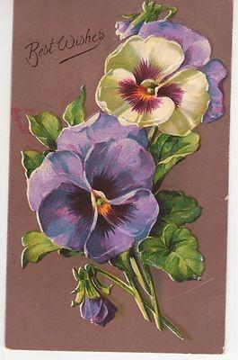 Vintage Greeting Postcard Purple Yellow Pansies Germany