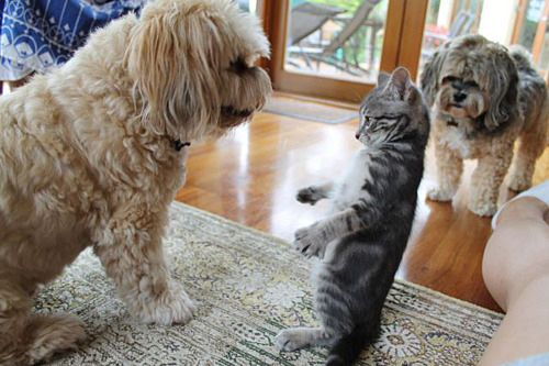 Or if your a hugger, go in for the hug. | Cats And Dogs Reveal The Secrets Of Making Friends