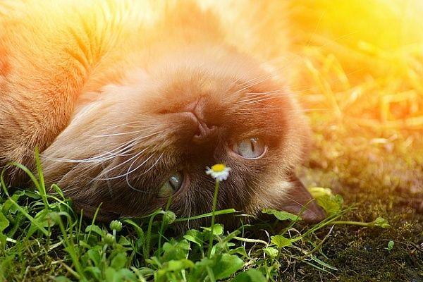Йога и кошки. Уроки мастерства от познавших дзен