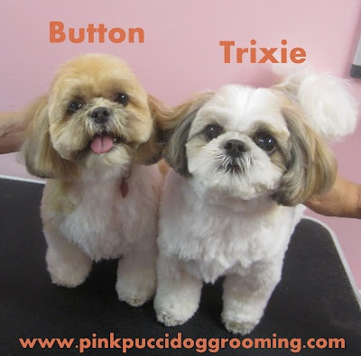 40 best nice grooming images on pinterest doggies funny stuff and torrance best dog grooming shop specializes in japanese dog styling solutioingenieria Gallery