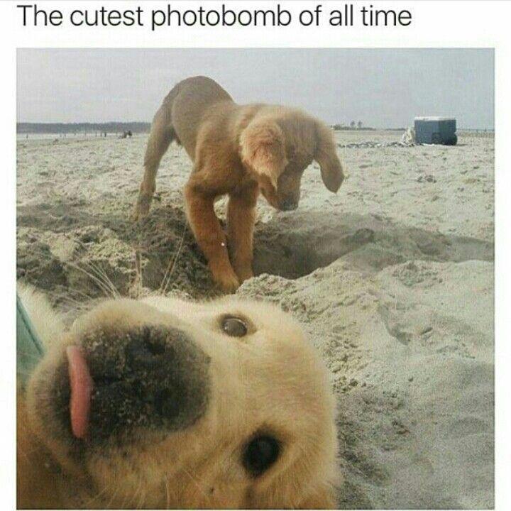 Photobomb!