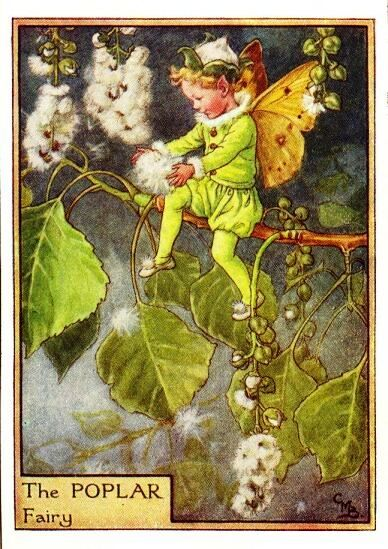Poplar Flower Fairy Vintage Print, c.1950 Cicely Mary Barker Book Plate…