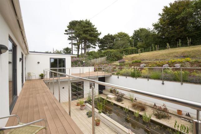 Modern Bog Garden
