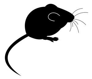 Mice - Control in Your Home Check more at http://www.pestrol.co.nz/blog/mice-control-in-your-home/