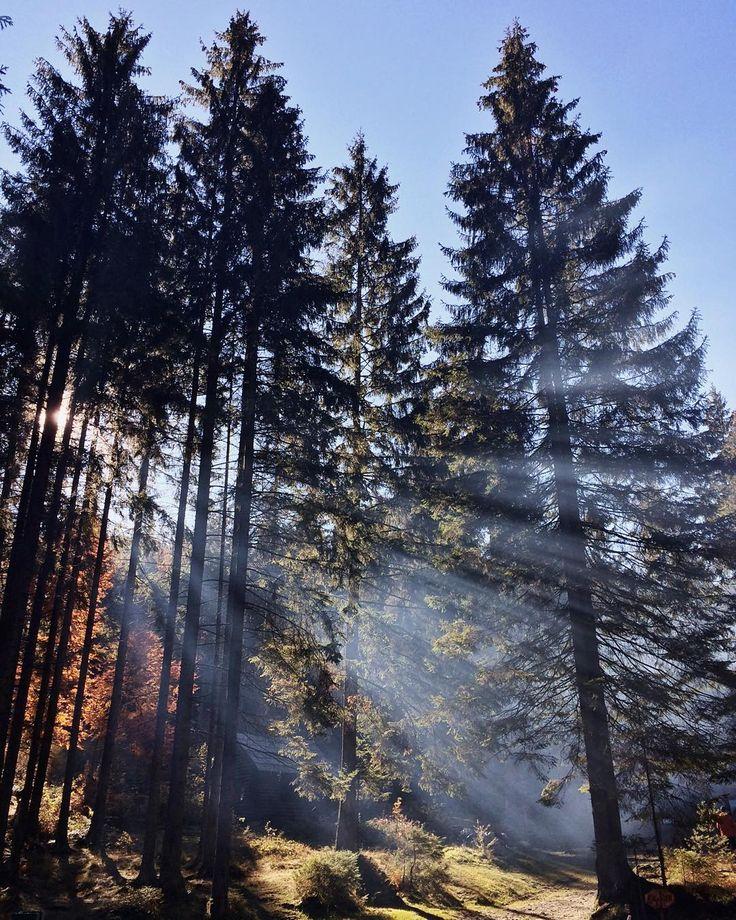 Ожившая сказка  утреннее солнце сквозь рассеивающийся туман. by ola_volina