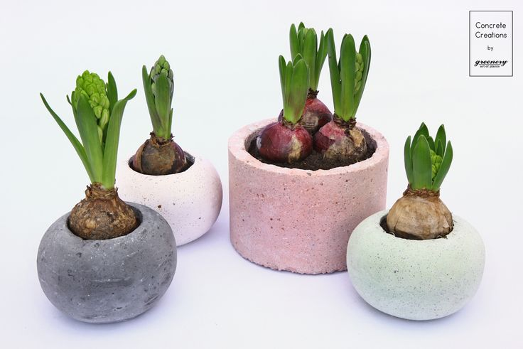 Waiting for the blooming Concrete creations by greenery #greenery #hyacinth #plants #concreteplanter #pot #planter #decoration #greece