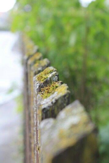 Alter mit Moos bewachsener Holzzaun...Natur