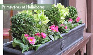 fenêtre-fleurie-hiver-primevères-hellebores-2