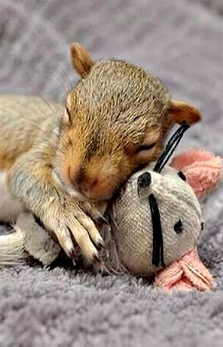 I sooo want another baby squirrel to raise again.. I miss my little squeakers...