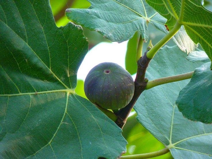 5 frutales de rápido crecimiento | Cuidar de tus plantas es facilisimo.com
