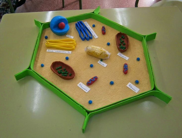 how to make an animal cell model out of paper
