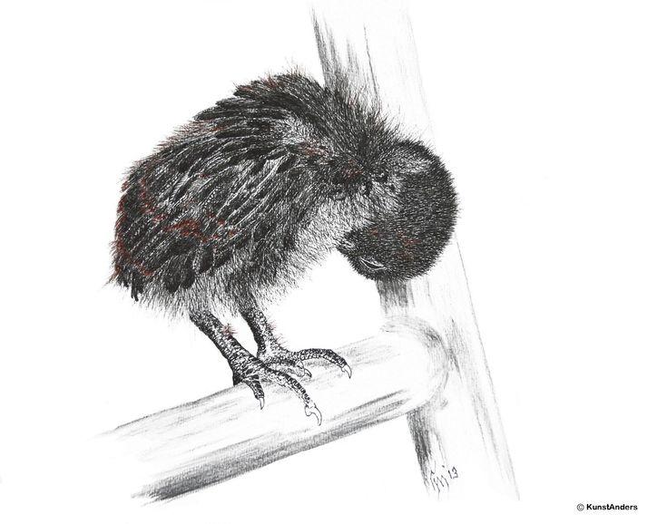 Hanneke Messelink-Anders. Kipkuiken. Dit kuikentje scharrelde tussen de stoelen door op het terras van de boerderijcamping, samen met zijn broertjes en zusjes. Hij had net gezien hoe moeder kip haar veren had opgepoetst en probeerde heel eigenwijs haar voorbeeld te volgen.