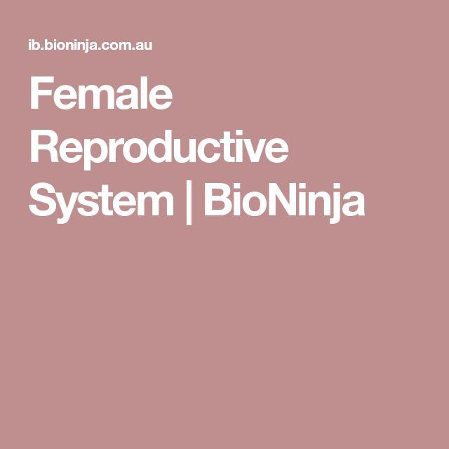 Female Reproductive System | BioNinja