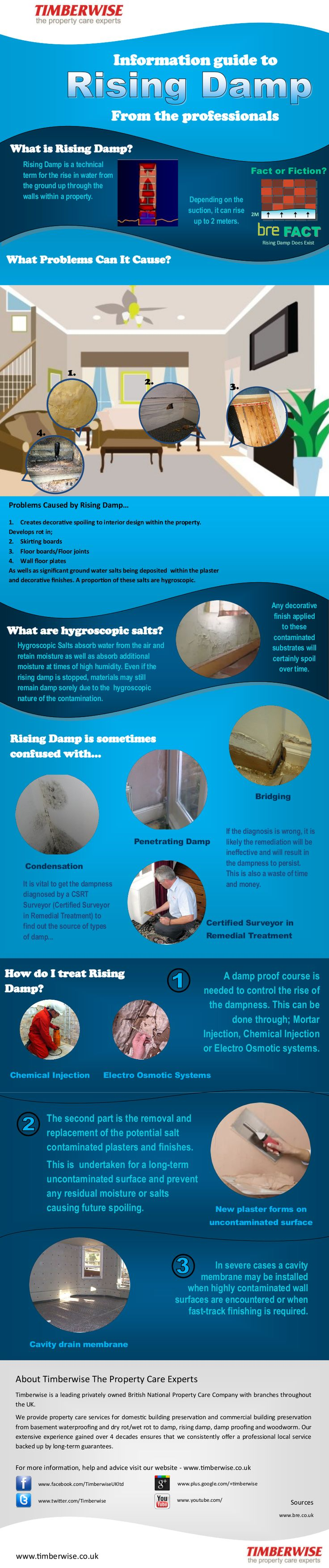 Rising Damp Infographic Information Guide from the Damp Specialists