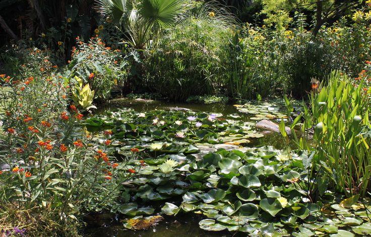 Tener un estanque casero peque o ideas para estanques for Estanque koi pequeno