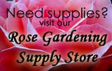 Mail Order Rose Bushes, Rose Bushes For Sale, Buy Rose Bushes