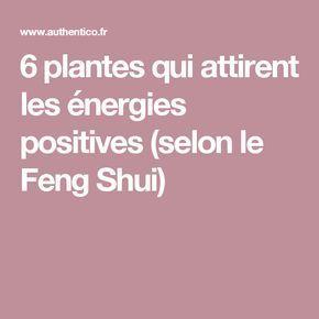 6 plantes qui attirent les énergies positives (selon le Feng Shui)