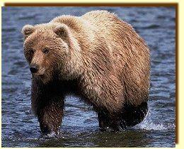 MEDVE Lap - Medvék, mackók - Farkas Nóra weblapja