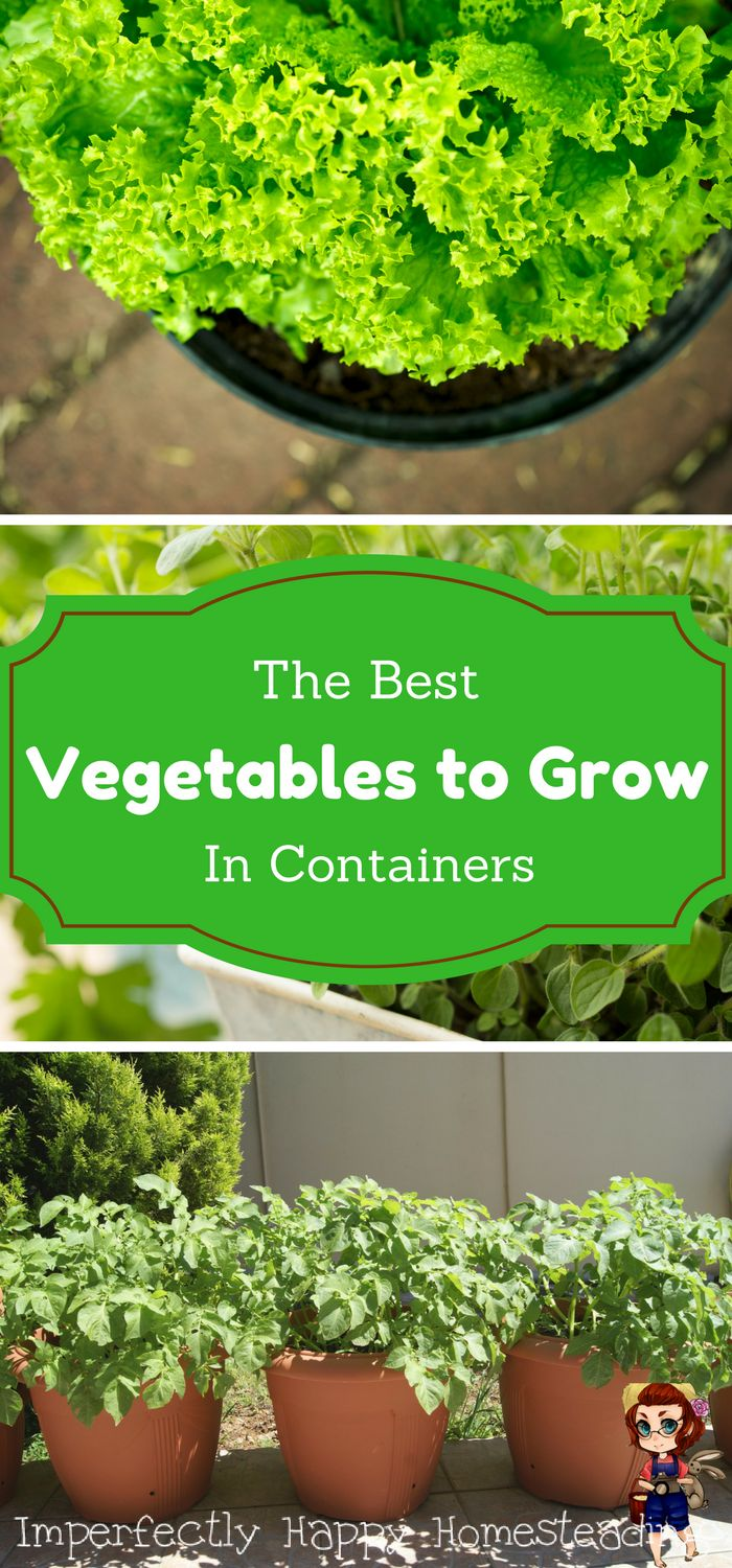 Growing lettuce in a pot - Growing Vegetables In Pots The Best Veggies That You Can Grow In Containers For Urban