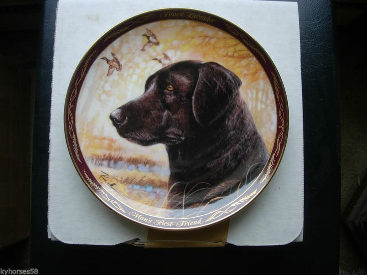 The Franklin Mint Plate  Black Labrador, Man's Best Friend