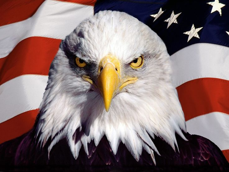 17 best ideas about american flag eagle on pinterest