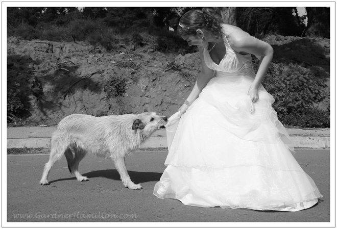 trash the dress. celebrate #divorce with your dog!