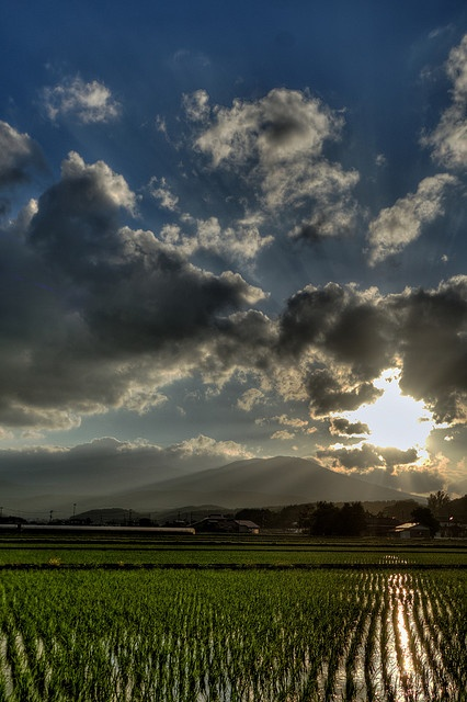 Summer sunsets over rice paddy in Tohoku, Japan