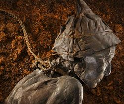 Perhaps the most famous and best preserved of all the bog mummies is the Tollund Man.