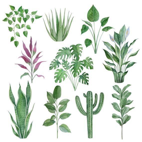 Aquarelle Plante D 39 Interieur Clipart Illustration De Plantes En Pot Aquarelle De Plante Watercolor Plants Plant Illustration Succulents Drawing