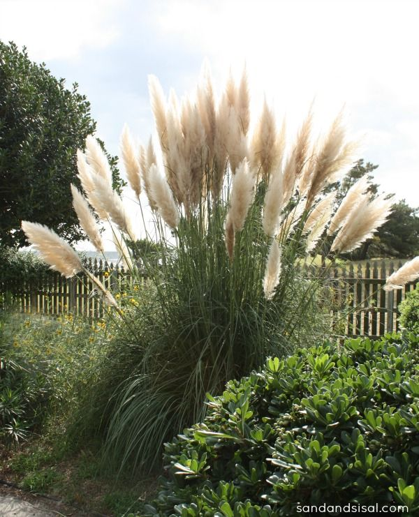 1000 images about ornamental grass ground covers on for Landscaping ideas with pampas grass