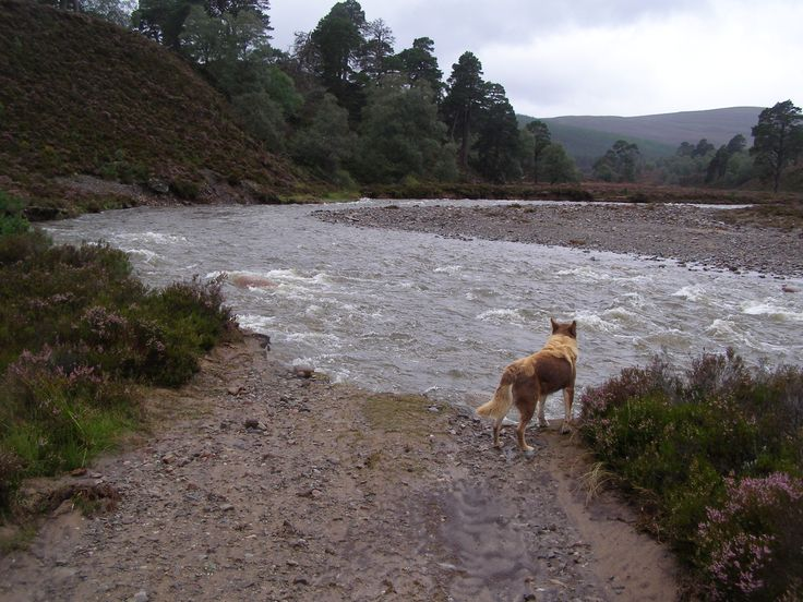 Floodwater has damaged many tracks and footpaths at Mar Lodge Estate, Scotland #NTSAppeal