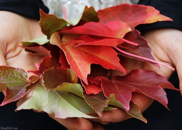 Make a Fall Wreath With Fresh Leaves for $0!