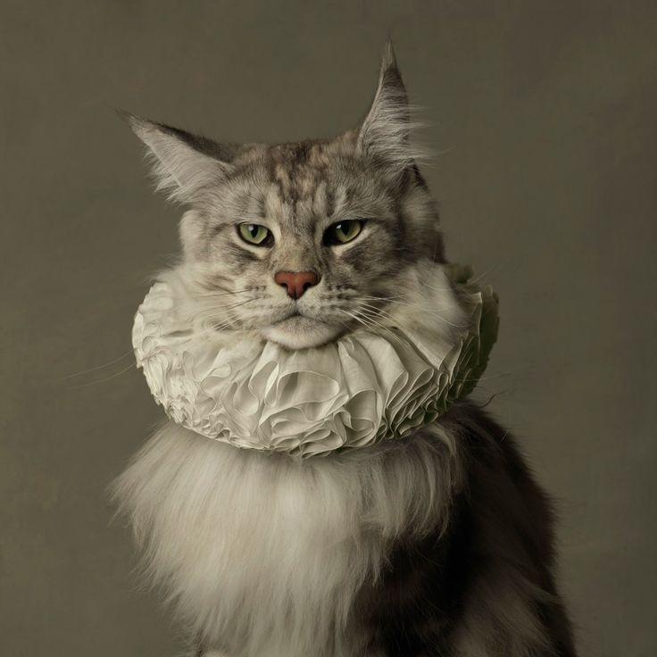 The Elizabethan cat. Sir Reginald Xavier Von Fluffybottom, C.1563     (by MARIE CECILE THIJS)
