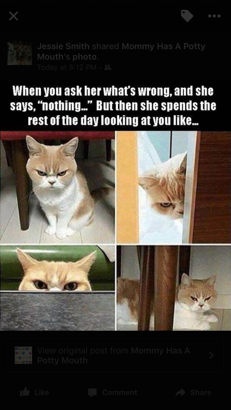 Funny pictures image by Joanna Garcia on funny Funny cat