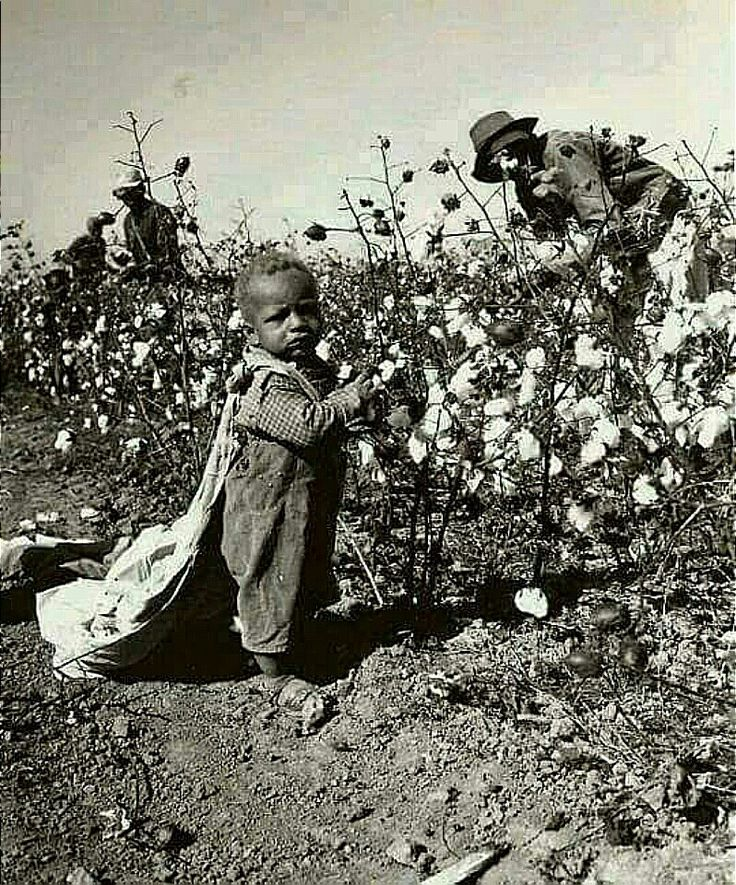 Baby Picking Cotton. If his mother was being paid, I would say the picture is too cute.