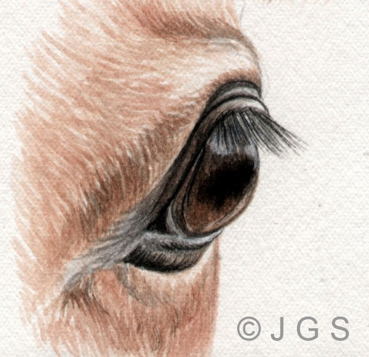 Draw and Paint Horses' Eyes: The Side View