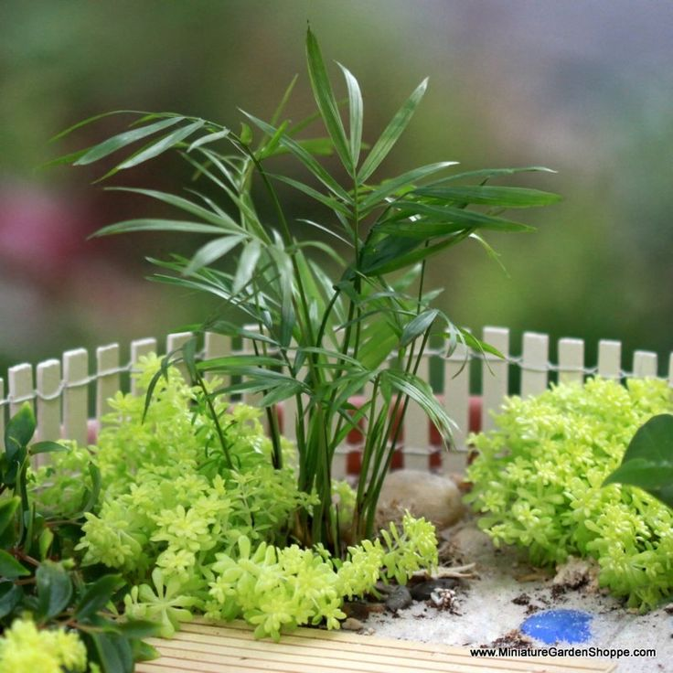 123 best GardensMinature with tipsideas images on Pinterest