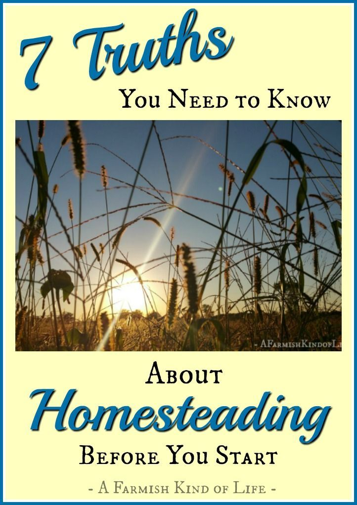 3093 best images about homesteading on pinterest root for Modern homesteading