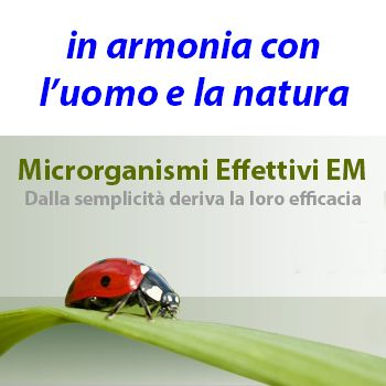 I MICRORGANISMI EFFETTIVI                 Tra rape giganti e cucina pulita un denominatore comune: i microrganismi effettivi! Dal Giappon...