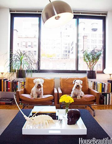 A couple of modern dogs on modern Danish furniture.
