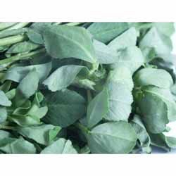 Methi Leaves/Fresh (Fenugreek Leaves)