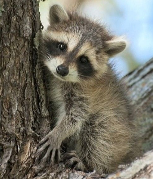 In memory of the dead raccoon in the grass