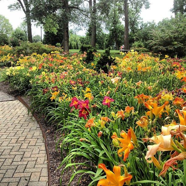Landscape Design In A Day: 25+ Best Ideas About Daylily Garden On Pinterest