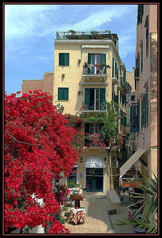 #Bougainvilleas #Oldtown #Corfu  http://www.delfinoblu.gr/agios-stefanos-corfu.htm